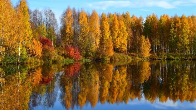 autumn rixk offer